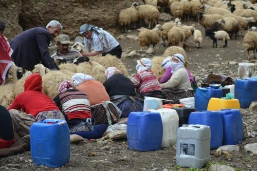 East Turkey pastoral life near lake Van DSC 0004 2